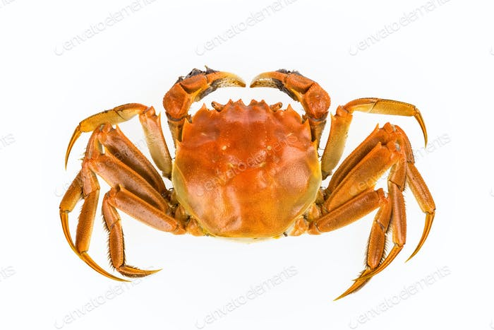 delicious freshwater crab