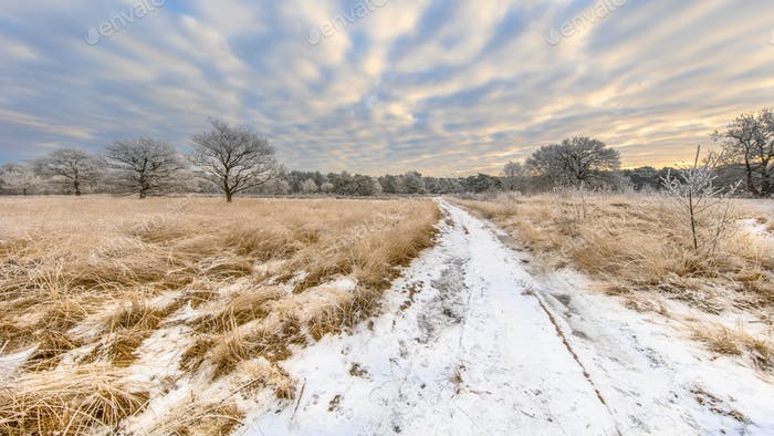 Path through Winter heathland landscape panorama Assen Drenthe