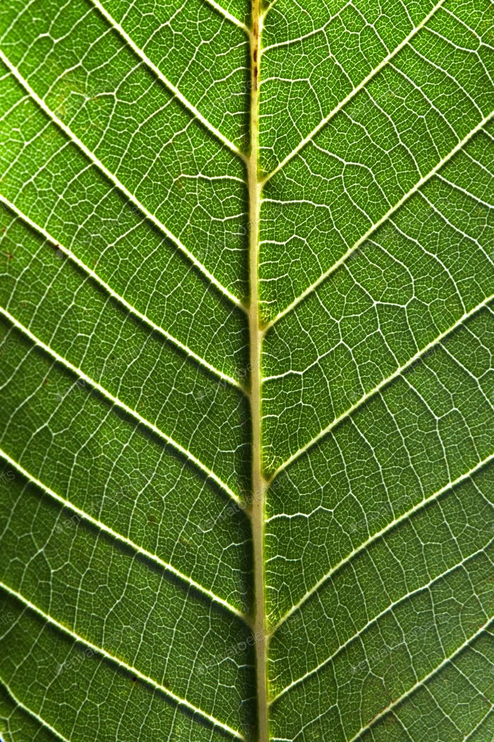 Macro photo of the back side of a green leaf with streaks. Leafy natural pattern. Top view