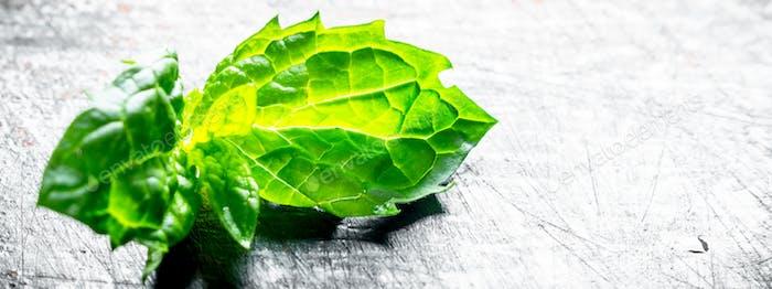 Leaves of fresh green mint.