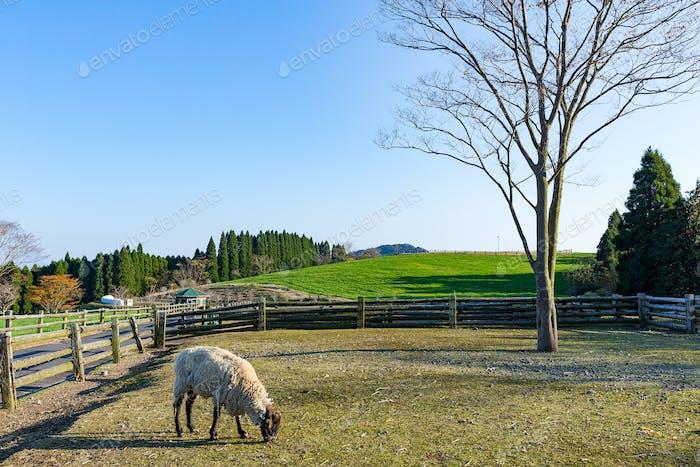 Schöner Bauernhof