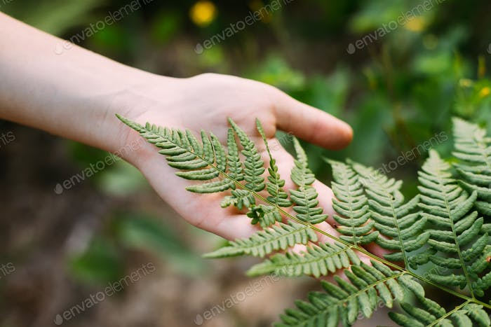 Young Girl Touching Holding Fern Leaf In Summer Park Forest. Clo