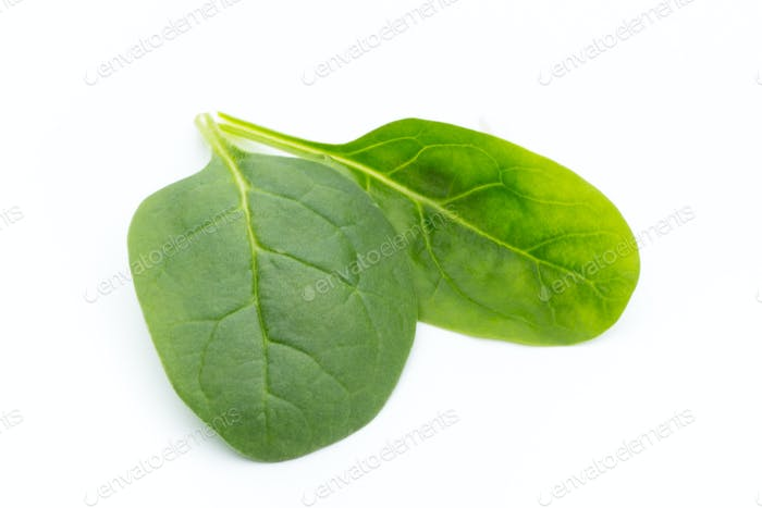 Spinach on the isolated white.
