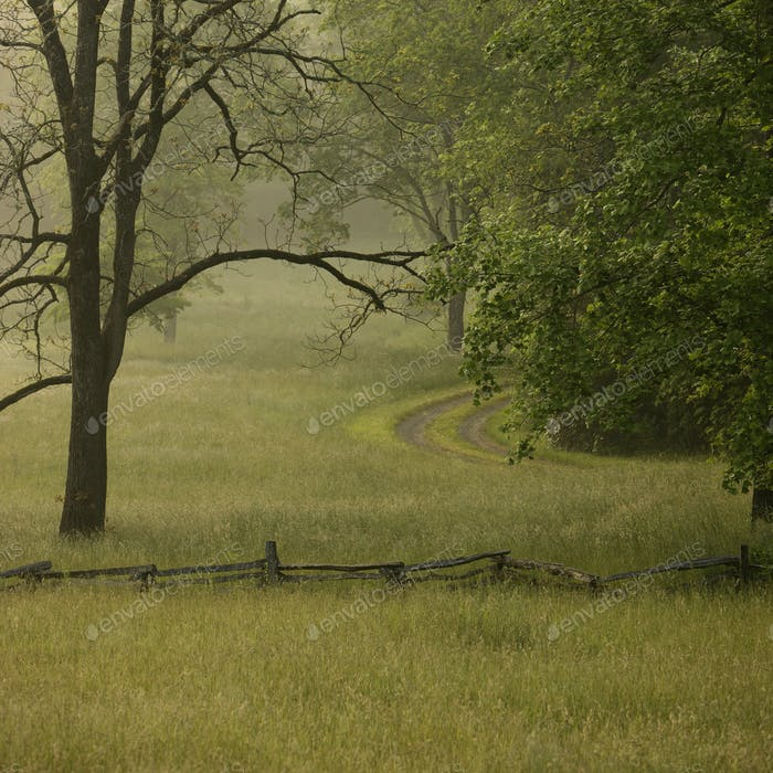 Ländliche Lane im Morgennebel