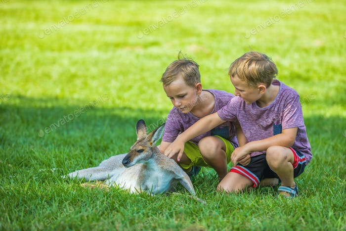 Two little boys sitting on the grass and touching australian kan