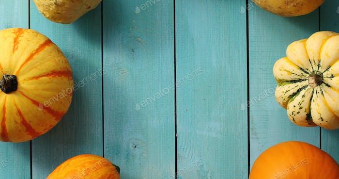 Big yellow pumpkins in circle