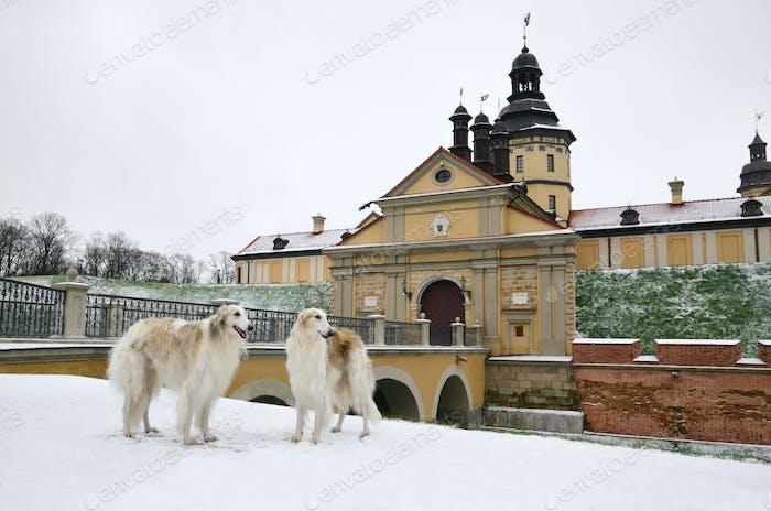 Radziwill castle in Nesvizh in Belarus