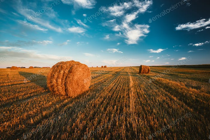 Rural Landscape Field Meadow With Hay Bales After Harvest In Sun