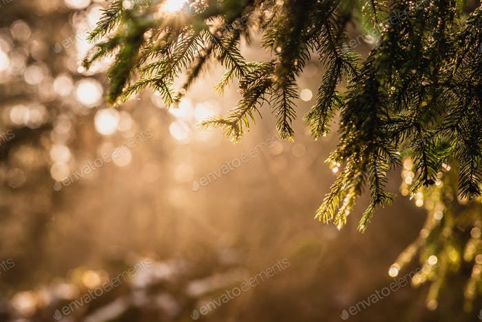 Magical Deep foggy Autumn Forest. Park. Beautiful Scene Misty Old Forest with Sun Rays, Shadows and