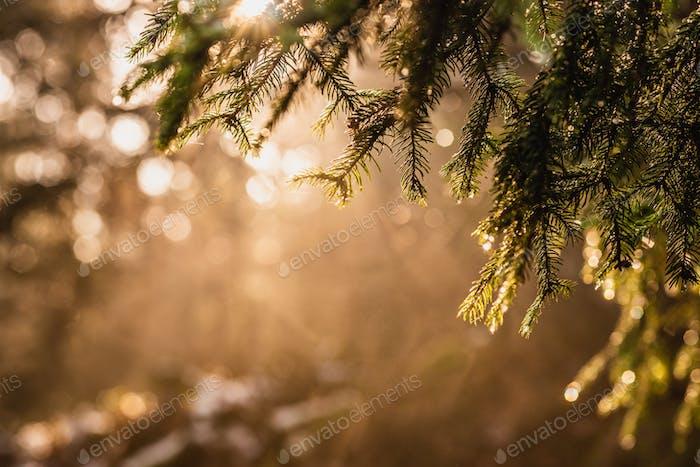 Magischer tiefnebliger Herbstwald. Park. Schöne Szene Misty Alten Wald mit Sonnenstrahlen, Schatten und