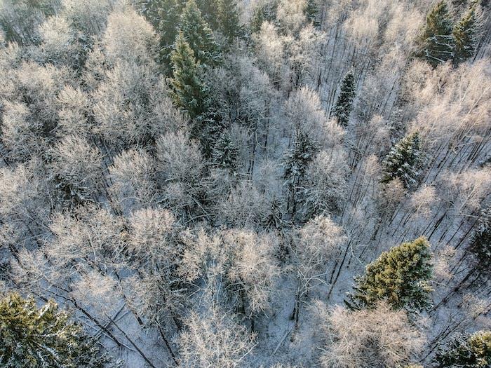 Winterwald an einem kalten sonnigen Morgen