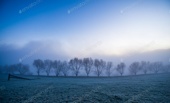 Small trees covered with blue fog in the Carpathian mountains in Ukraine