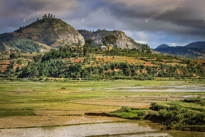 Ricefields of Madagascar