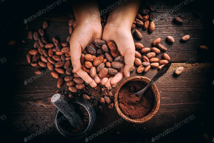 Hand holding cocoa beans