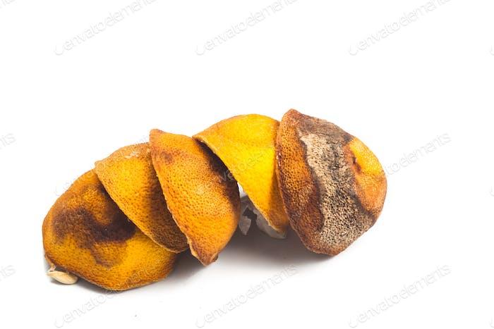 Dried lemon citrus peel in white background