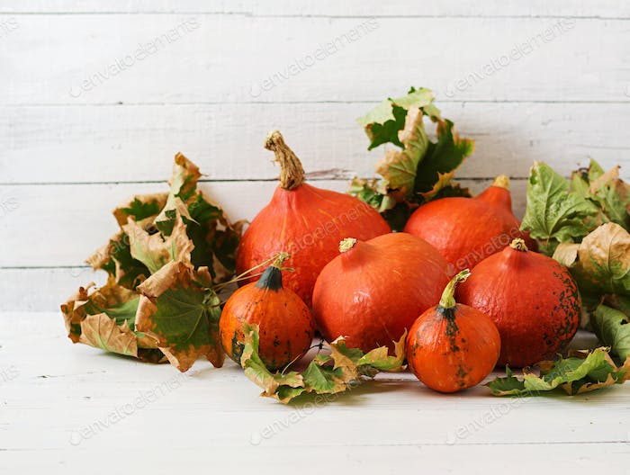 Autumn pumpkins and leaves on a white wooden background. Thanksgiving background. Halloween.
