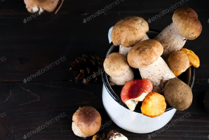 boletus mushroom in the cup on dark background, copy space
