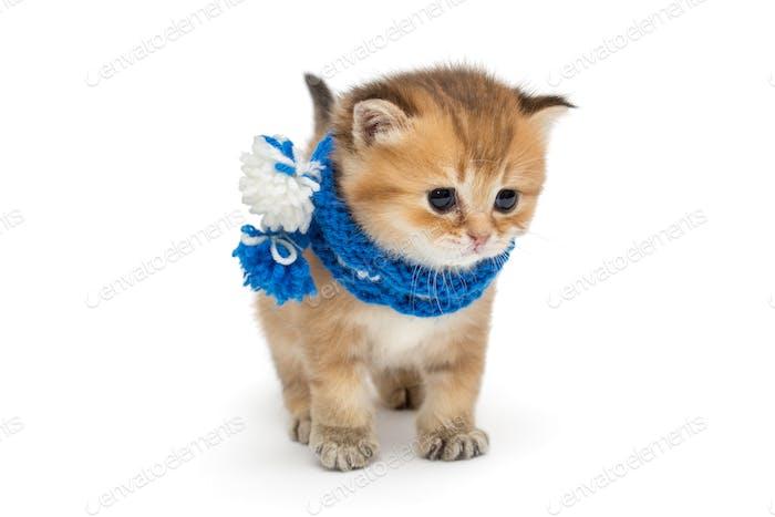Kleines rotes Kätzchen in blauem Schal