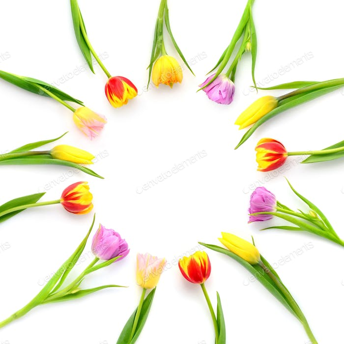 Creative arrangement of tulip flowers on white background with s