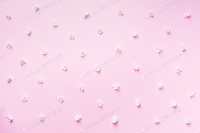 Daisy pattern. Top view. Flat lay. Floral pattern of white chamomile flowers on pink background