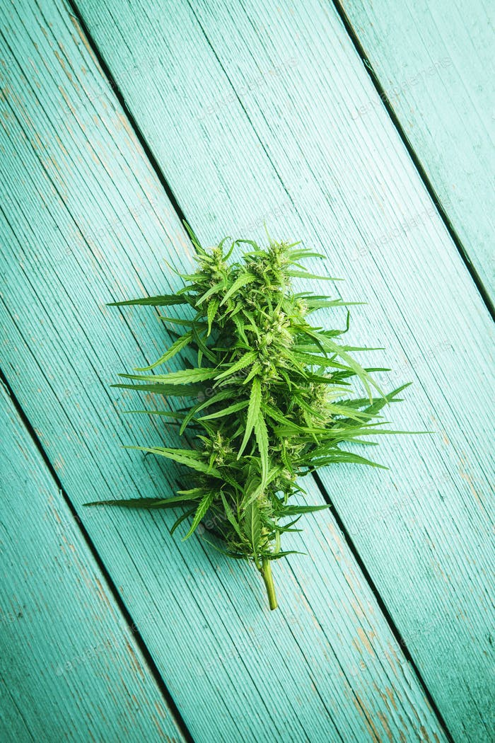 Marijuana bud flowers of cannabis
