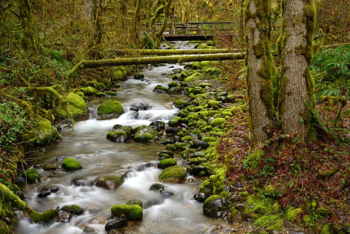 Oregon Rain Forest Mossy Green Babbling Brook