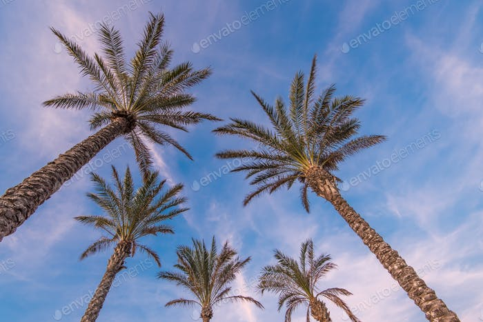 Tropical palm trees on the beach