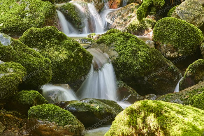 Water stream with mossy rocks in Muniellos Biosphere Reserve. Asturias