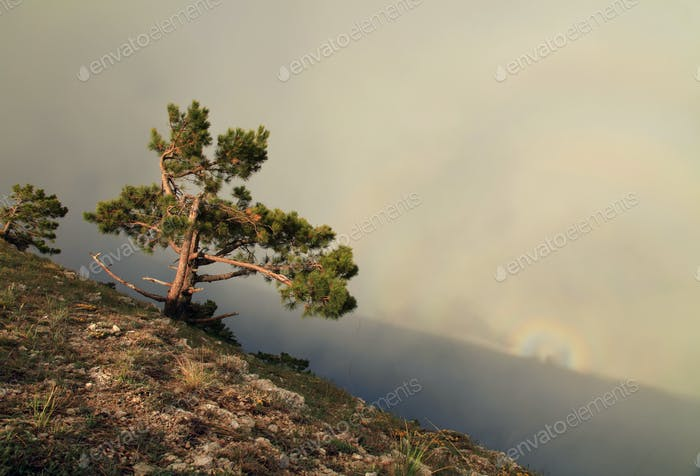 Tree on the misty sky background in mountains