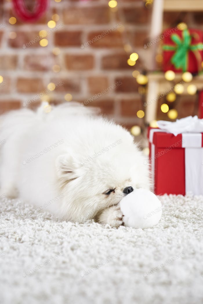 Puppy playing with ball at christmas time
