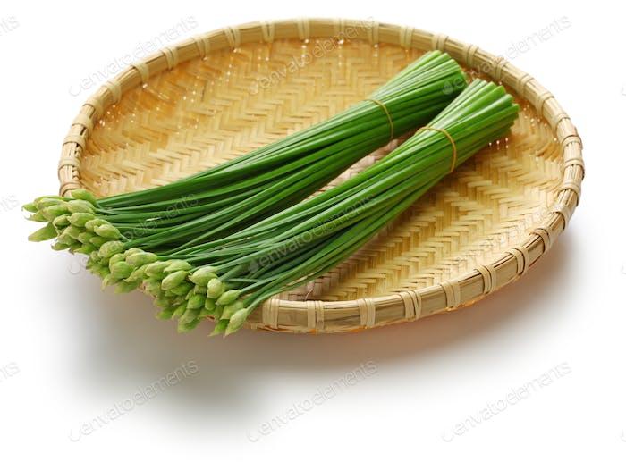 flowering garlic chives on bamboo basket