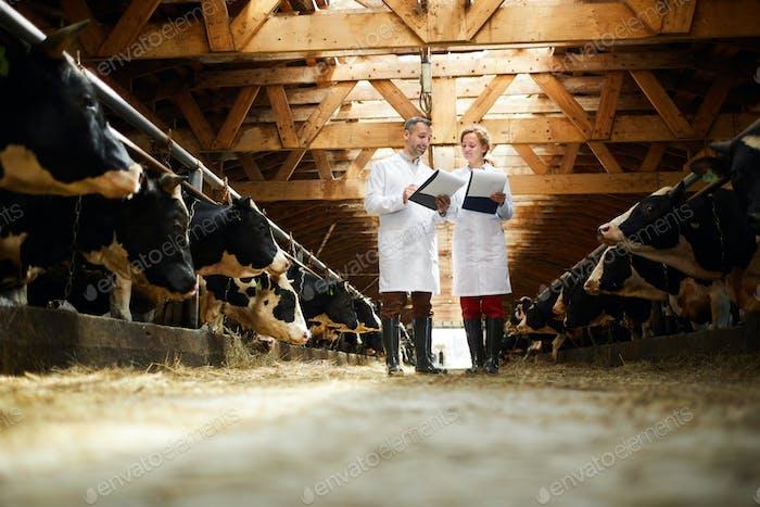 Veterinarian Inspection at Farm