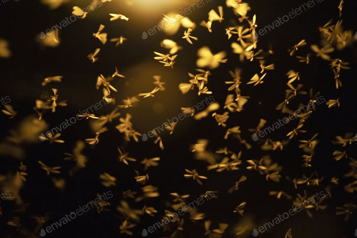 Abstract and magical image of flying moths.