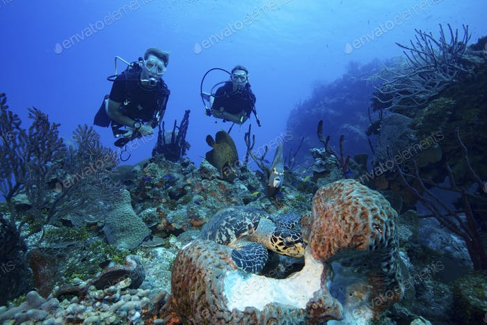 Divers watch interaction of different species of marine life underwater