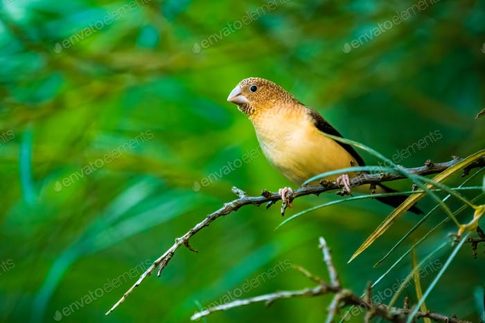 Small bird sitting on a brach against green background