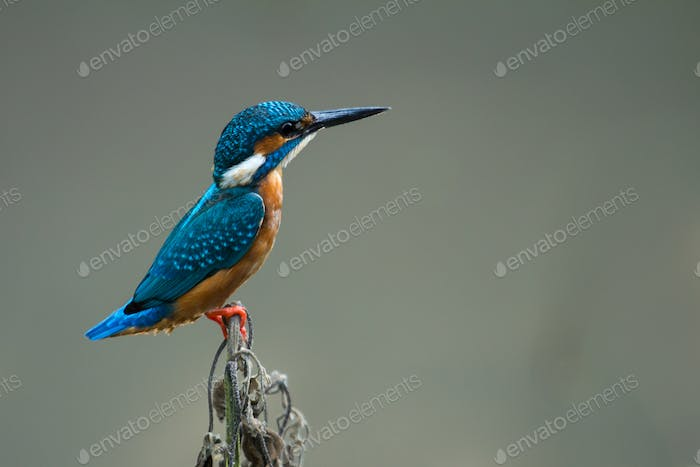 Colourful Bird Colourful Kingfisher in Black Background