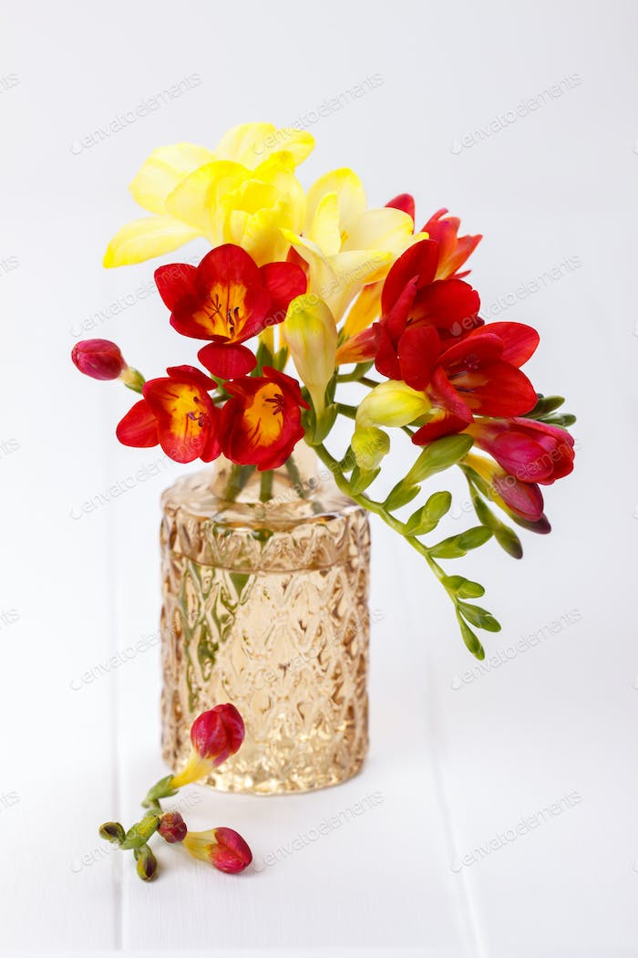 Yellow and red freesias