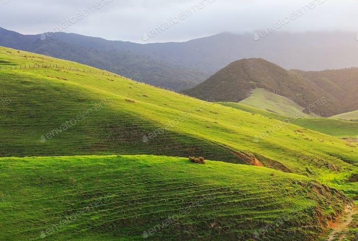 Neuseeländische Hügel
