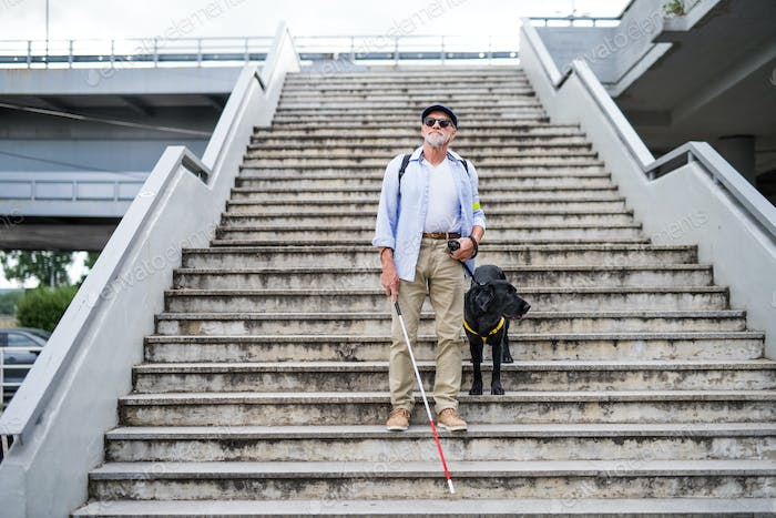Senior blind man with guide dog walking down the stairs in city