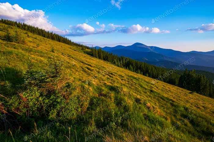 Colorful summer landscape