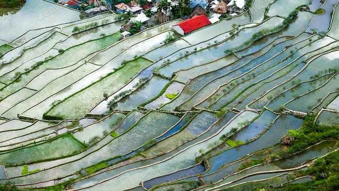 Village houses near rice terraces fields. Banaue, Philippines