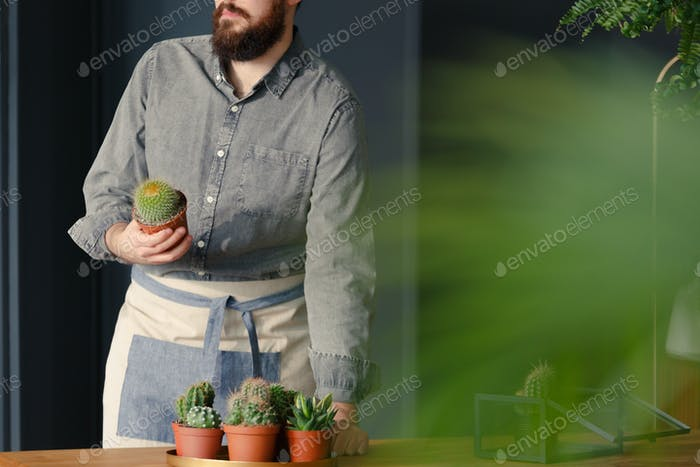 Gardener holding cactus with succulents on table while working i