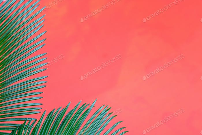 Tropical Background Palm Trees Branches.