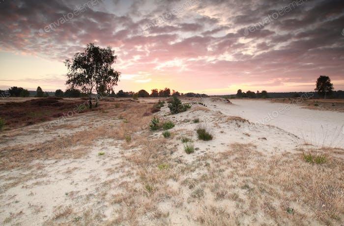 summer sunrise over sand dunes