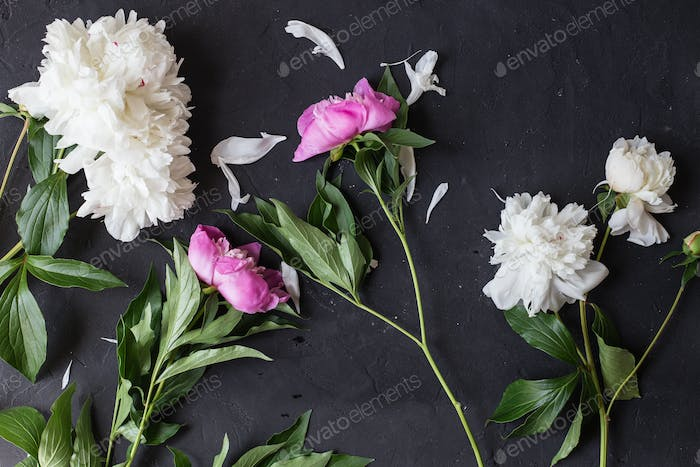 Peonies bouquet on black background