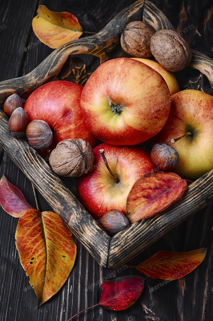 Basket of autumn apples