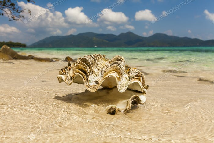 Big seashell on the sandy beach of a tropical island. Koh Chang