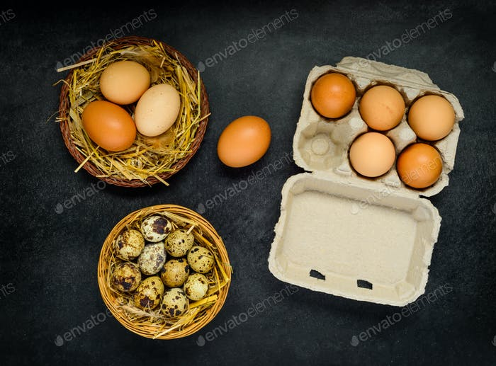 Eggs in Box and Nest
