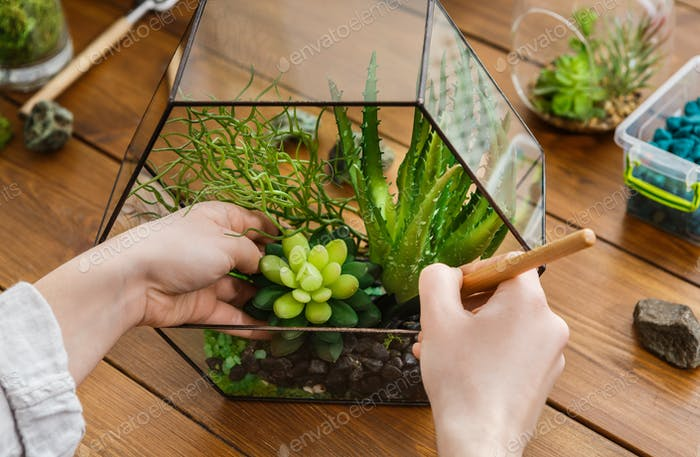 Woman transplanting plants in florarium. Home gardening concept