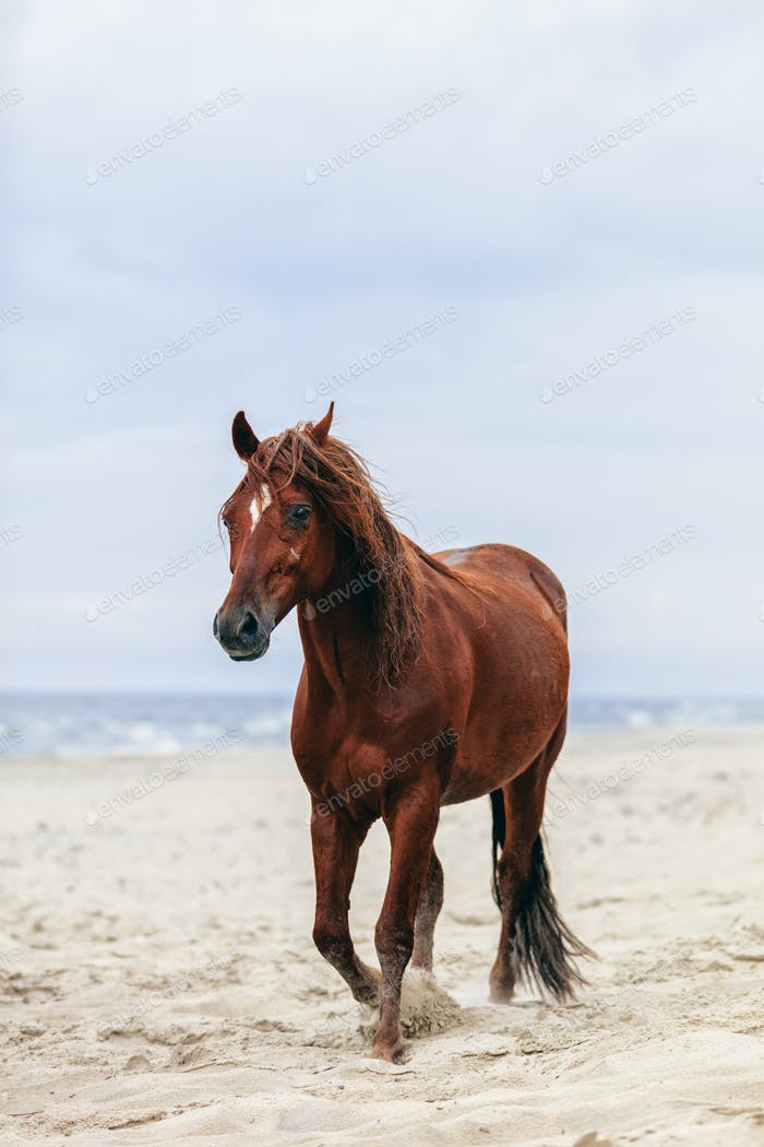 Brown horse walking by the sea on the sandy beach.